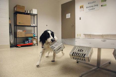 Dogs Are Being Trained to Sniff Out Smuggled Artifacts | Heritage in Danger | Scoop.it