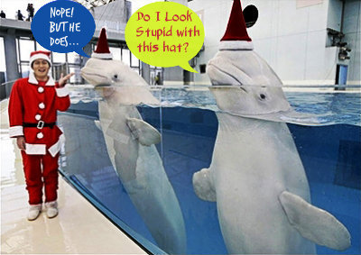 Some Reasons Why Cetaceans like Beluga whales are not suitable for Captivity (Especially in Manila Ocean Park) | Earth Island Institute Philippines | Scoop.it