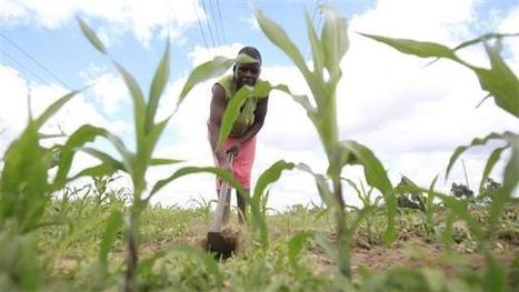 Foresight Africa 2016: Banking on agriculture for Africa's future | Sustainable Futures | Scoop.it