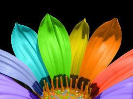 Momentos de Ciência: Uma explosão de cores no feminino | Banco de Aulas | Scoop.it