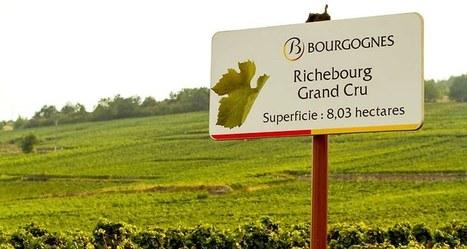 Quels sont les vins les plus chers au monde? | Univers du vin | Scoop.it