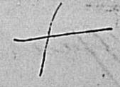 Le Nuage de Paris - Signatures anciennes | Rhit Genealogie | Scoop.it