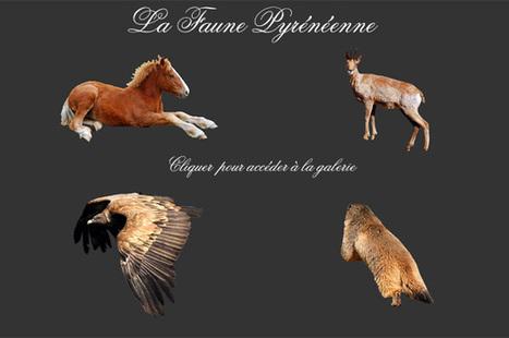 Les Topos Pyrénées par Mariano | Actualités Rando | Scoop.it
