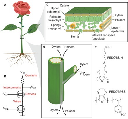 Electronic plants | plant cell genetics | Scoop.it