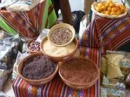 Globally Important Agricultural Heritage Systems News | Agricultural Biodiversity | Scoop.it