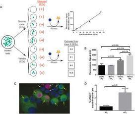 BioTechniques - An assay for small scale screening of candidate β cell proliferative factors using intact islets | diabetes and more | Scoop.it