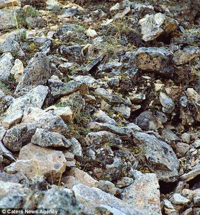Animal camouflage: spot the beasts | Science and Nature | Scoop.it