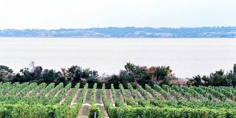 Un livre pour découvrir un coin de Gironde : le Médoc vigneron sous le Second Empire | Le vin quotidien | Scoop.it