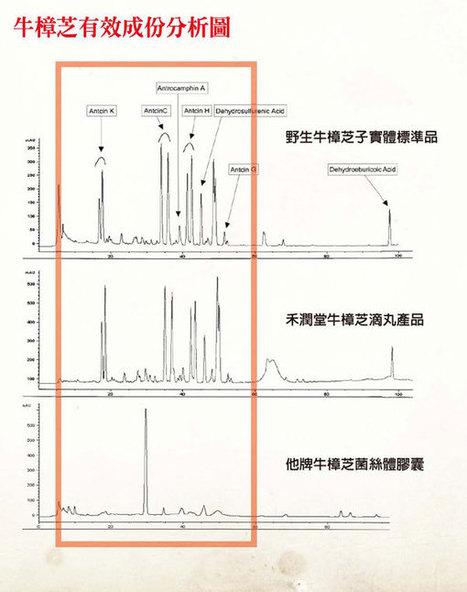 牛樟芝功效 - 牛樟芝價格 - 如何選擇牛樟芝 antrodia efficacy | 健康無價 | Scoop.it