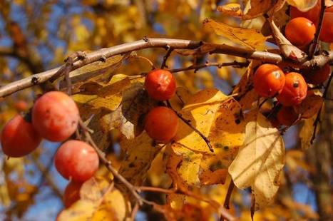 North Carolina brewers turn to foragers, farmers | Saxapahaw | Scoop.it
