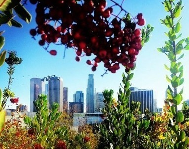 Through the Eyes of an Urban Planner: Integration of Vegetation | Healthy Cities & Urban Planning | PowerHouse Growers | Urban Agriculture and Design | Scoop.it