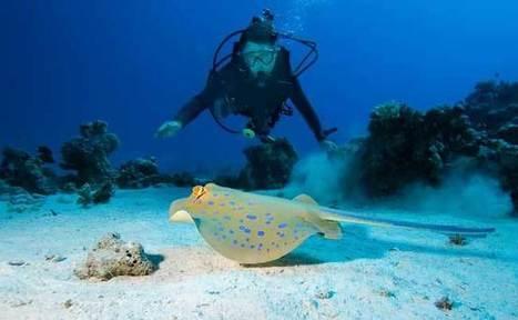 Innovation : Diveboard, le réseau social des plongeurs ! | Le marketing digital du tourisme | Scoop.it