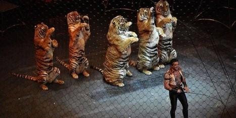 David Cameron va interdire les animaux sauvages dans les cirques anglais | Protection animale | Scoop.it