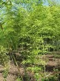 Top Rated Shrubs For Edibility   Agricultural Biodiversity   Scoop.it