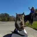 Didga the Skateboarding Cat | Action Sports & Lifestyle Blog | Skater Life | Scoop.it