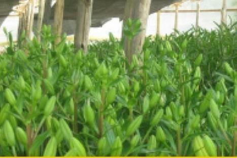 Bella Vista, flores de Bolivia al mundo - La Prensa (Bolivia) | Ecología y Sostenibilidad | Scoop.it