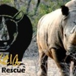 Hat off to Peter and Team for protecting the last rhinos | Wildlife Conservation: People and Stories | Scoop.it