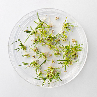 Making Biodegradable Plastic from Grass   MIT Technology Review   What's Up in Plastics?   Scoop.it