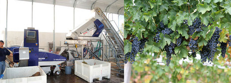 Automated Grape Sorting Systems Delivers Better Wine and Great ROI | Robotic applications | Scoop.it