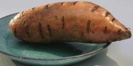 La patate douce, preuve de la découverte de l'Amérique par les Polynésiens | Le BONHEUR comme indice d'épanouissement social et économique. | Scoop.it