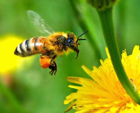 Du venin d'abeille pour détruire le virus du Sida | Actus Bien-être - Santé | Scoop.it