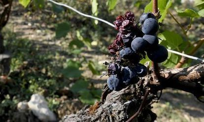 World #Wine Output Near 20-Year Low as Rain, Frost Hit Vineyards | Vitabella Wine Daily Gossip | Scoop.it