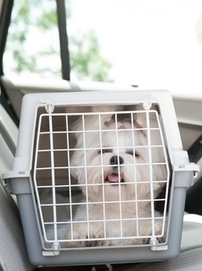 6 Tips for Crate Training Dogs | Pet Health Tips | Scoop.it