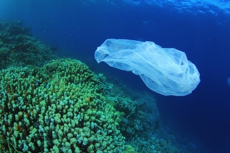 Ocean Garbage Patch Is Mysteriously Disappearing | BAHS World Geography | Scoop.it