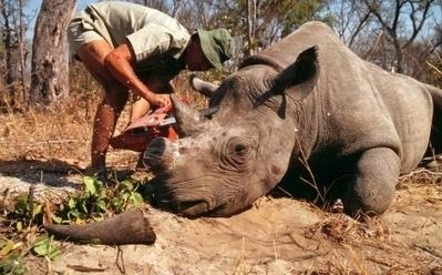 Limpopo: el paraíso de los cazadores ilegales | Planeta Tierra | Scoop.it