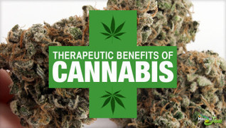 The Therapeutic Benefits Of Cannabis, According To Science   Drugs, Society, Human Rights & Justice   Scoop.it