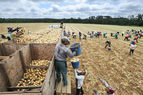 Workers Claim Racial Bias in Farms' Hiring of Immigrants | Community Village Daily | Scoop.it