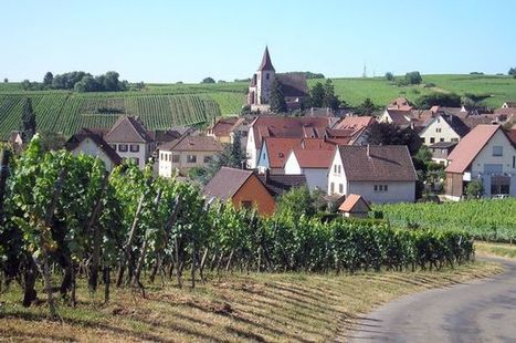 The white wines of Alsace are so food friendly | Vitabella Wine Daily Gossip | Scoop.it