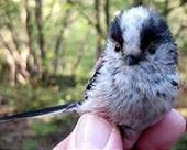 Life hots up for British birds   Sustain Our Earth   Scoop.it