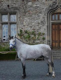 Le monde équestre ému pour deux poneys disparus | Cheval et sport | Scoop.it