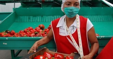 Mexico: Food exports increased in 2013 | Emerging Economies1 | Scoop.it