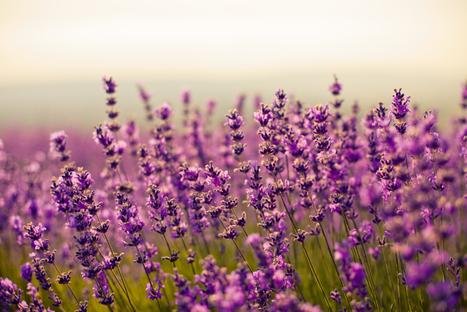 Intégrer l'aromathérapie et ses bienfaits au quotidien   Nature, société et développement   Scoop.it
