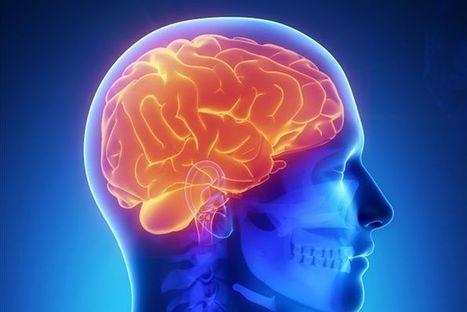 Gene sweep finds variants that make your brain unique | Social Neuroscience Advances | Scoop.it
