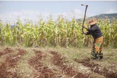 Monde : l'insécurité alimentaire s'aggrave ! | Chimie verte et agroécologie | Scoop.it