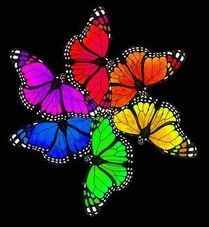 Rainbow butterflies.... | My Photo | Scoop.it