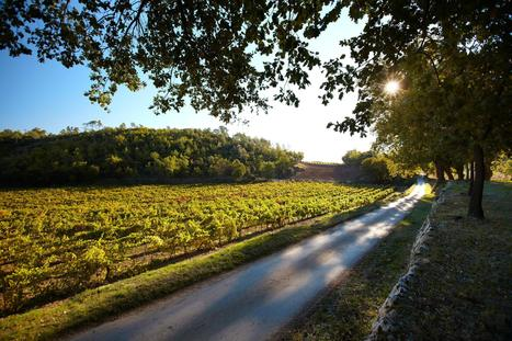 As the heat rises, the wines are a-changing | Vitabella Wine Daily Gossip | Scoop.it