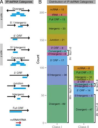 Anti-sense RNA and Sensibility | Virology and Bioinformatics from Virology.ca | Scoop.it
