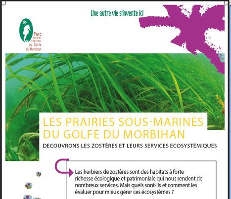Les prairies sous-marines du Golfe du Morbihan | Centre de ressources Fédération des parcs naturels régionaux | Scoop.it
