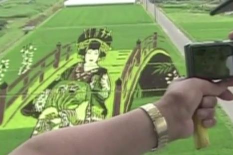 Cultivos de arroz en Japón se convierten en obras de arte | Cultura Visual | Scoop.it