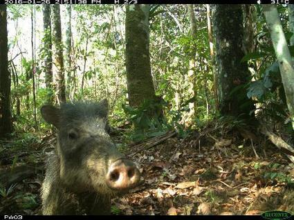Field Museum expedition captures animal selfies in Amazon Rainforest | Science Codex | Rainforest EXPLORER:  News & Notes | Scoop.it
