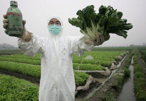 Haro sur les pesticides pour sauver les abeilles | Bio alimentation | Scoop.it