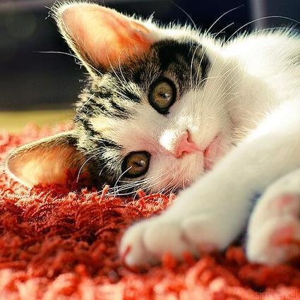 Tweet from @Cats | animal rescue | Scoop.it