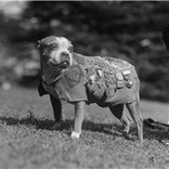 Memorial Day: Animals Among War Heroes Celebrated | Pedegru | Animals Make Life Better | Scoop.it