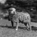 Memorial Day: Animals Among War Heroes Celebrated | Pedegru | Animals Make Life Better | Scoop.it
