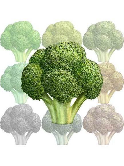Crean un 'superbrócoli' que elimina toxinas   Brocoli   Scoop.it