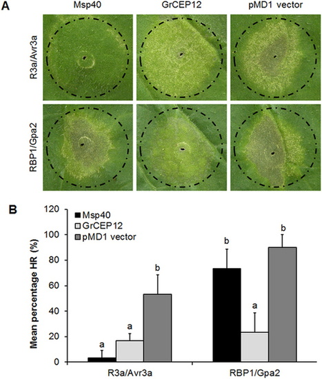 Sci Reports: Msp40 effector of root-knot nematode manipulates plant immunity to facilitate parasitism | Plant-Microbe Interaction | Scoop.it